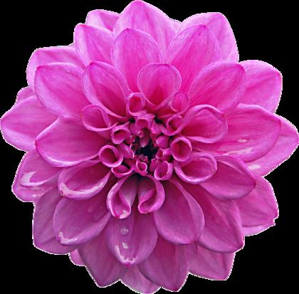 flower2_deeger4.png?type=w420