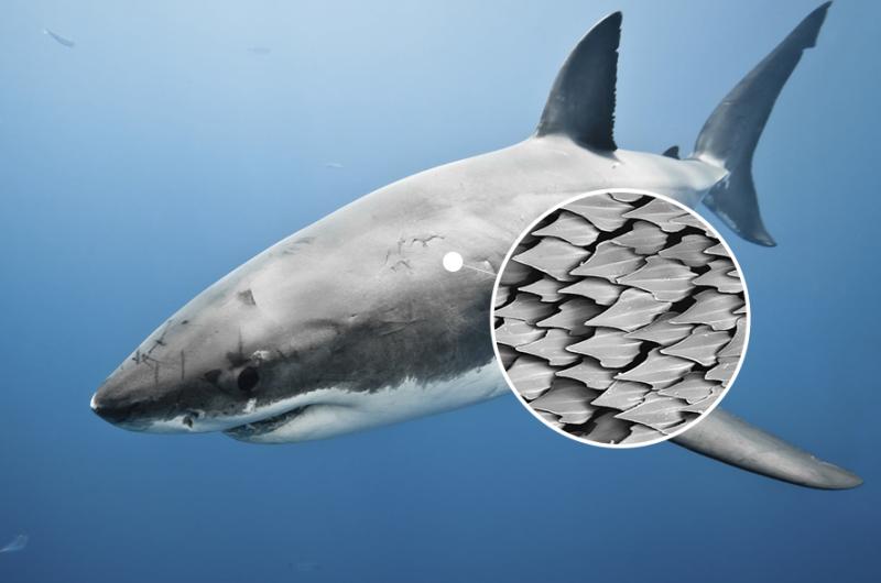abca00d2911 상어 비늘로 이런 것까지!? 놀라운 생체모방기술! : 네이버 블로그